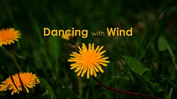 Dancing with Wind