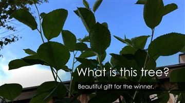 What is this tree? Beautiful gift for the winner.